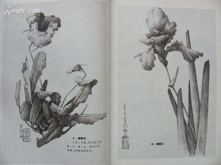 素描花卉200像素